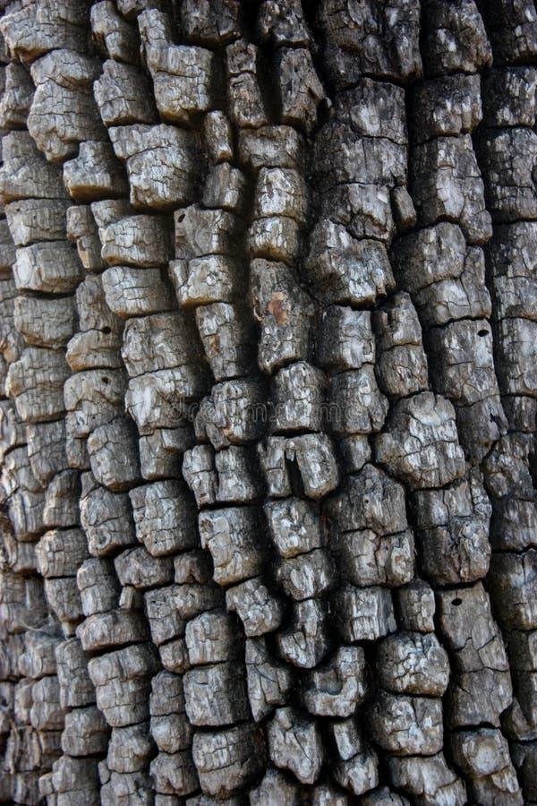 Gealterte strukturierte Barke lizenzfreies stockbild