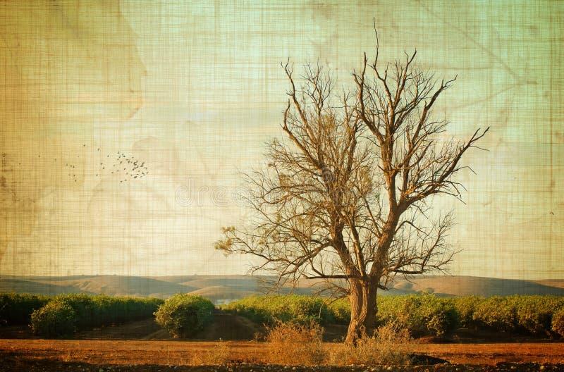 Gealterter Baum stockbilder
