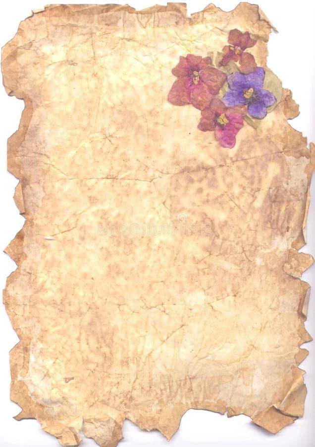 Gealtertes Papier und Veilchen vektor abbildung