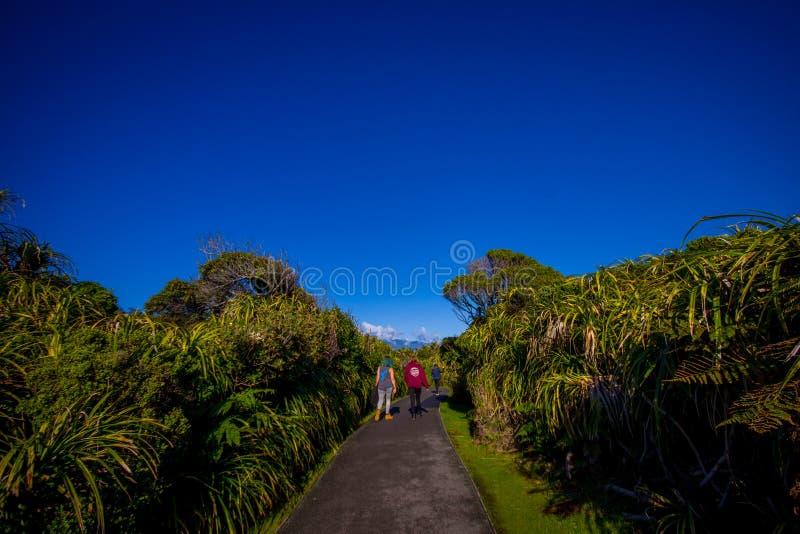 Geasfalteerde weg door gematigd regenwoud met bomen in zuideneiland, in Nieuw Zeeland stock fotografie