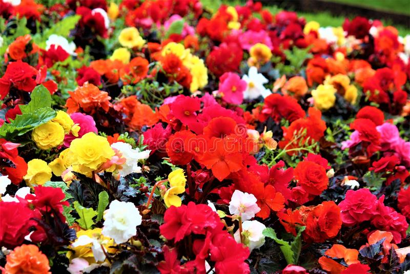 Geassorteerde bloemen in een tuin royalty-vrije stock fotografie