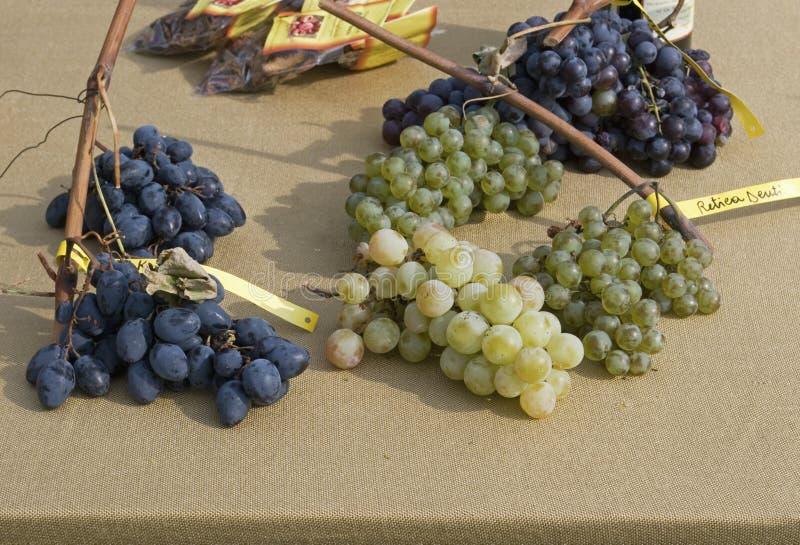 Download Geassorteerde Druiven stock afbeelding. Afbeelding bestaande uit verscheidenheid - 39104905