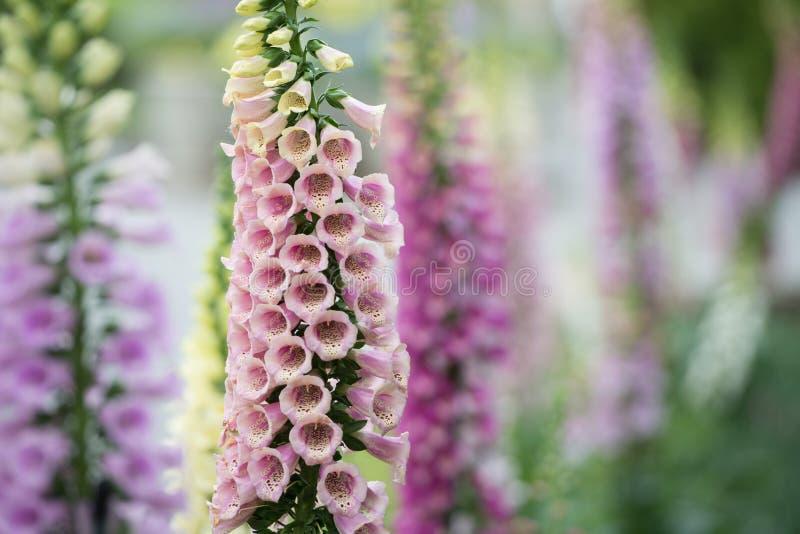 Geassorteerde gekleurde klokbloemen stock foto