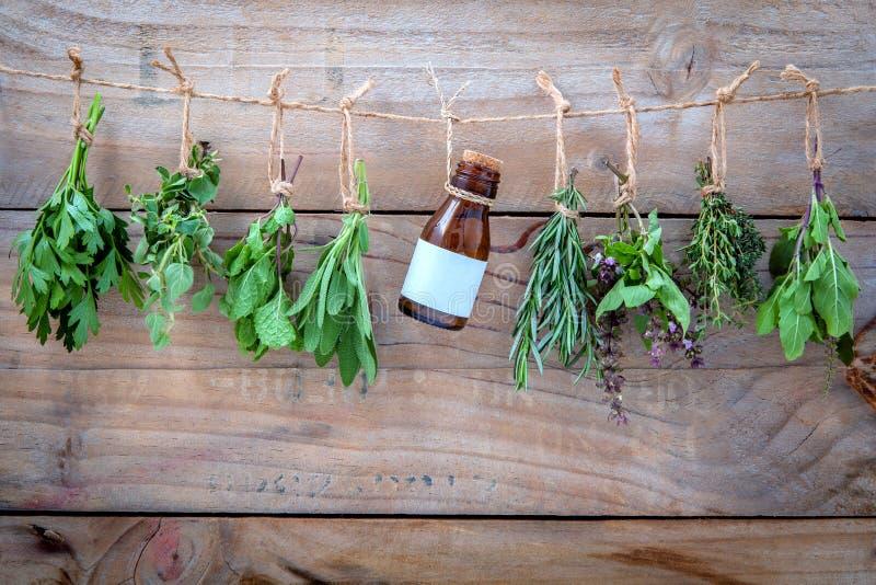 Geassorteerde hangende kruiden, peterselie, orego, munt, salie, rozemarijn, swee stock foto