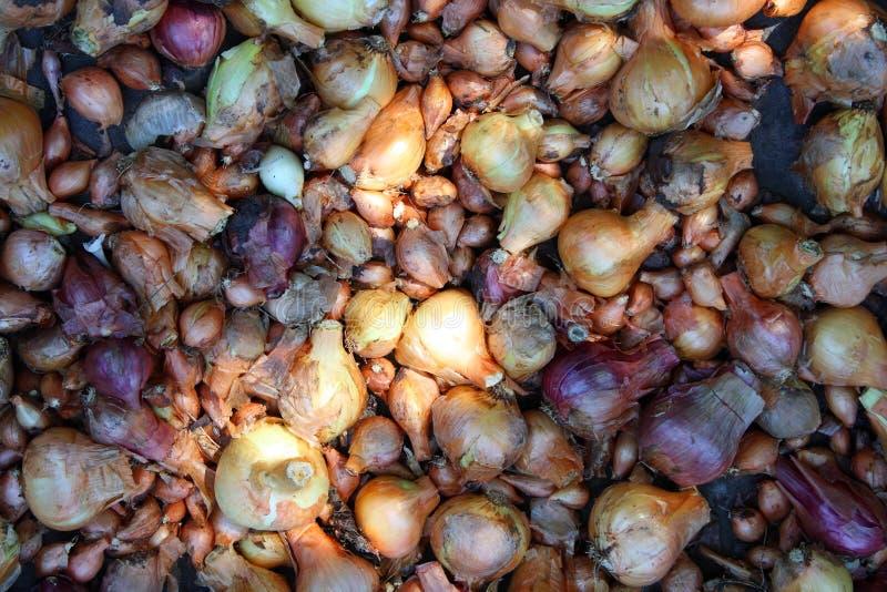 Geassorteerde uien De achtergrond van de oogsttuin stock foto's