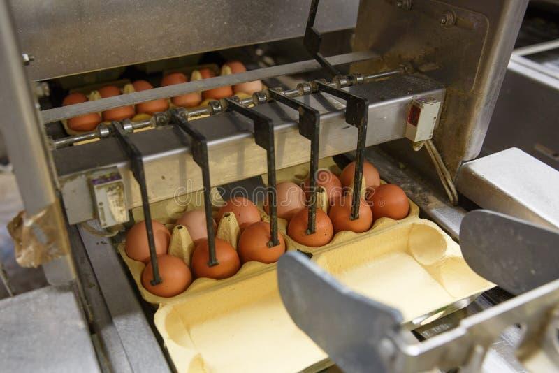 Geautomatiseerde verpakking van ruwe en verse kippeneieren stock foto's