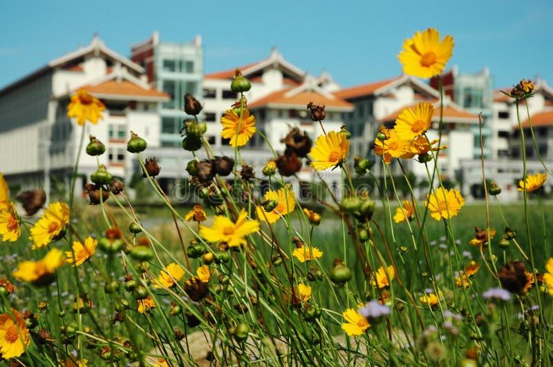 Gebäude in den Blumen lizenzfreies stockfoto