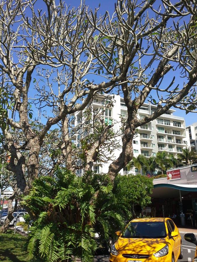 Gebäude in den Steinhaufen Queensland lizenzfreies stockfoto