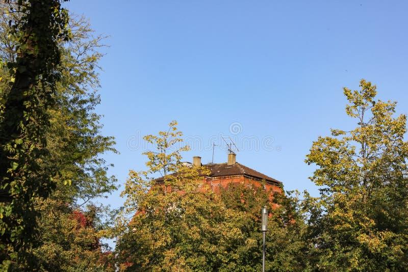 Gebäude hinter Stadtparkbäumen stockfotos