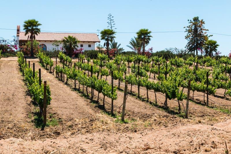 Gebäude im Weinberg bei Adobe Guadalupe Winery in Ensenada, Mexiko stockbild