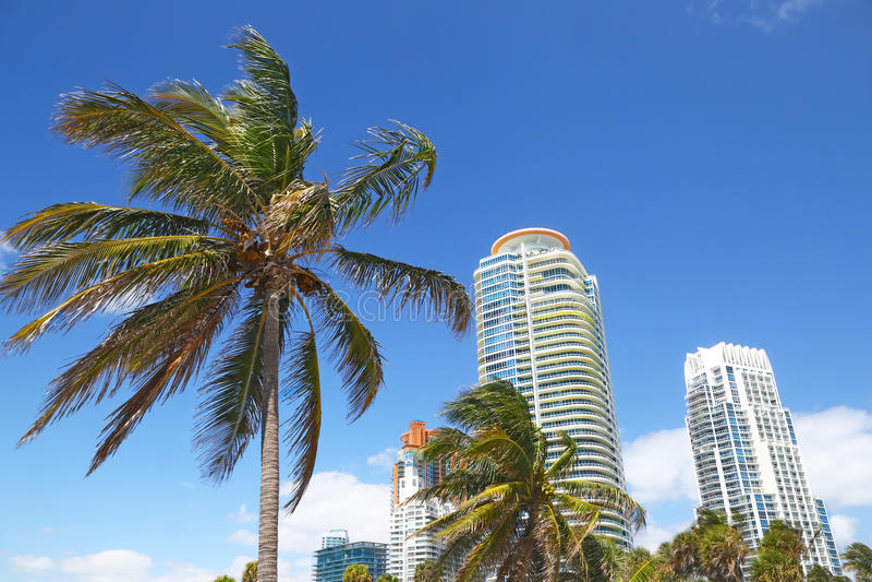 Gebäude u. Palmen des Miami Beachs lizenzfreies stockbild
