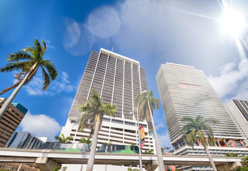 Gebäude und Einschienenbahn von im Stadtzentrum gelegenem Miami mit Palmen an einem sonnigen Tag lizenzfreie stockbilder
