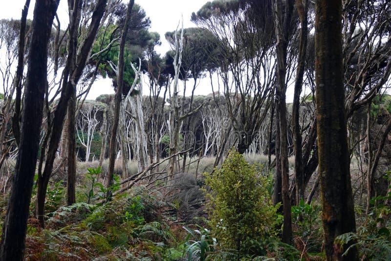 Gebürtiger Wald des Catlins an der Kuriositäts-Bucht, Neuseeland lizenzfreies stockfoto
