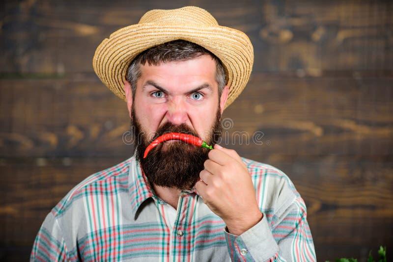 Gebaarde de Spaanse pepers Spaanse peper van de landbouwersgreep De peper houten achtergrond van landbouwers boze hete Spaanse pe stock foto's
