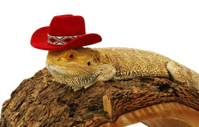 Gebaarde draak met hoed stock foto's