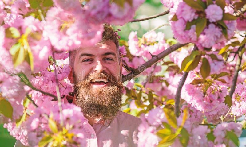 Gebaarde mens met modieus kapsel met sakurabloemen op achtergrond Hipster in roze overhemd dichtbij tak van sakura Mens stock foto