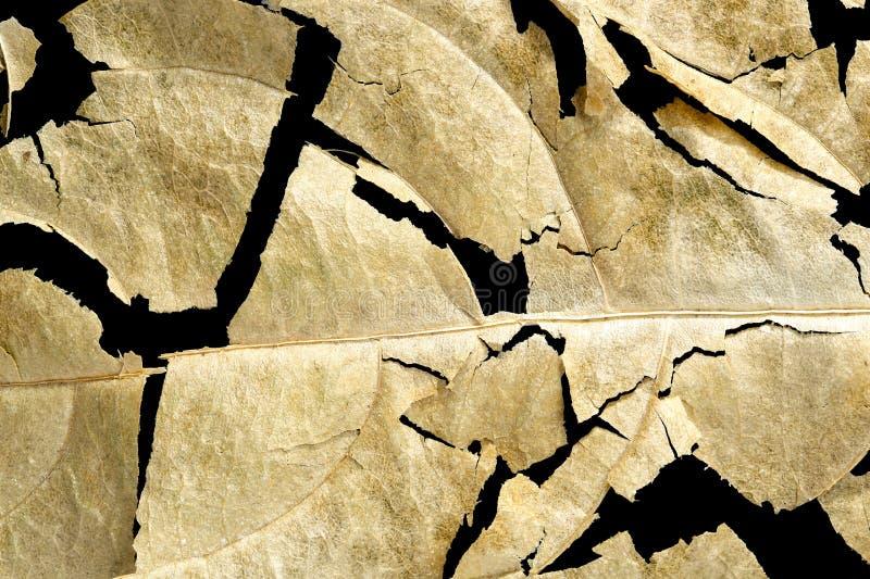 Gebarsten droog blad stock afbeelding