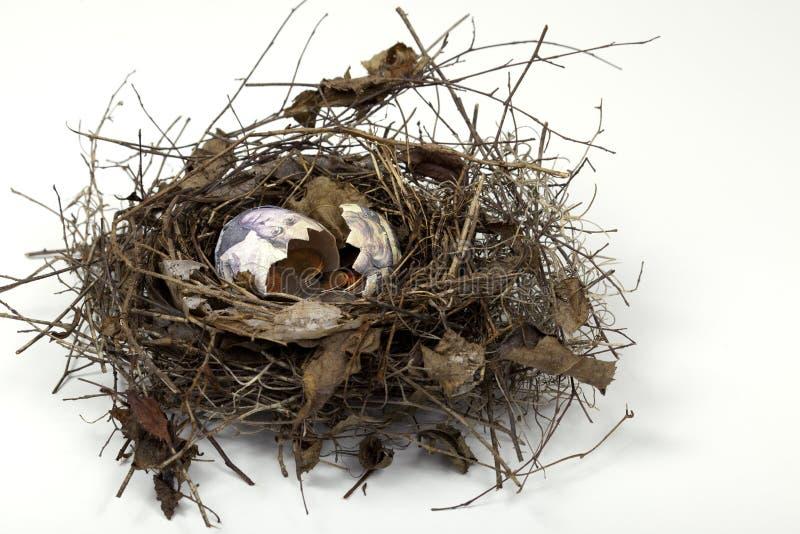 Gebarsten het Ei van het nest stock fotografie