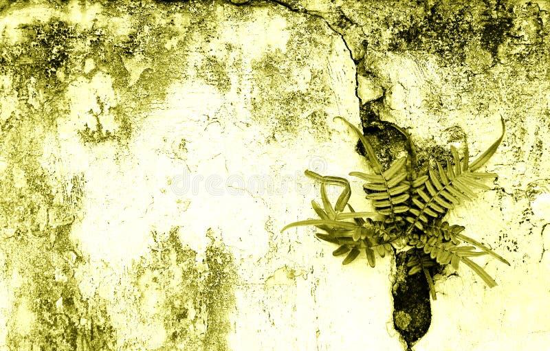 Gebarsten oude muur & varens stock afbeelding