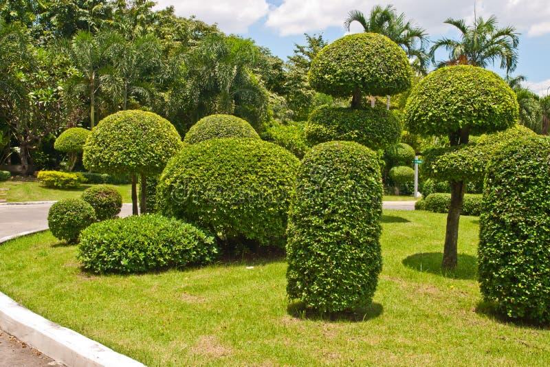 Gebeeldhouwde bomen in het park royalty-vrije stock fotografie