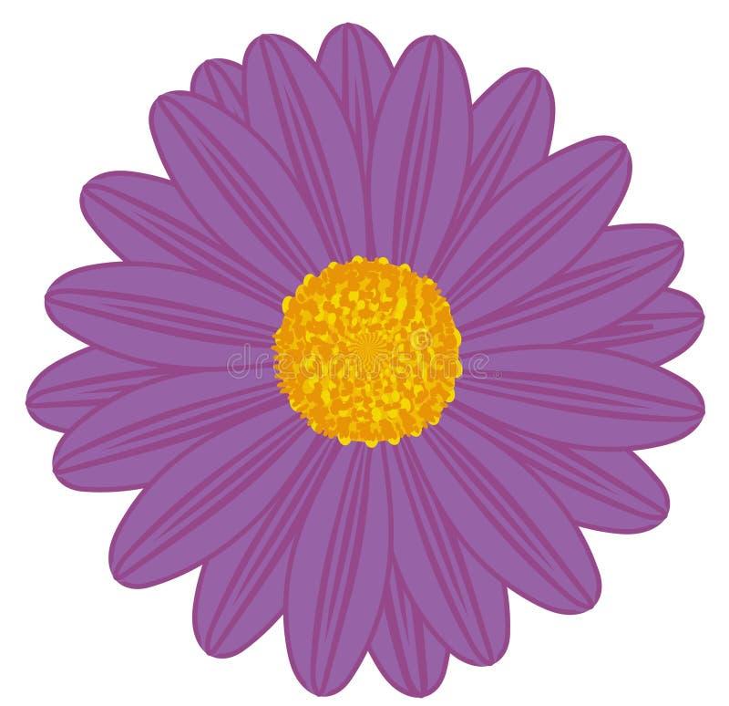 Gebied Daisy Purple royalty-vrije illustratie