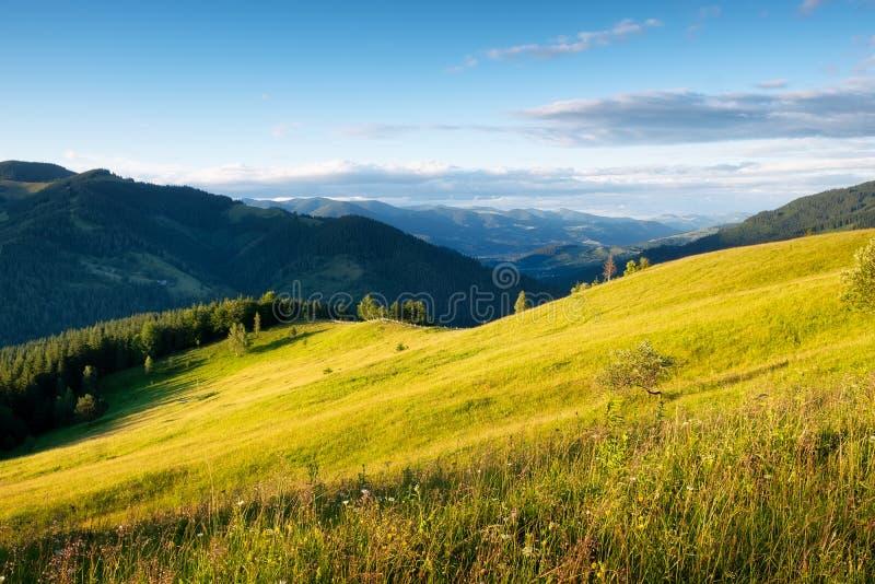 Gebied in de bergen De zomerbos in bergen Natuurlijk de zomerlandschap Weide met bloemen in bergen Landelijk landschap stock afbeeldingen