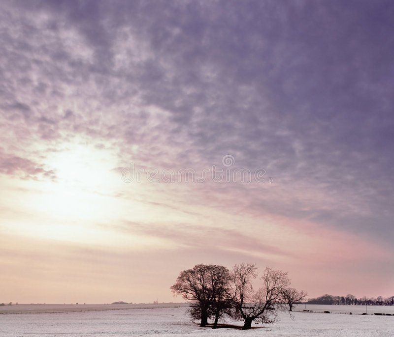 Gebied in de winter royalty-vrije stock foto's