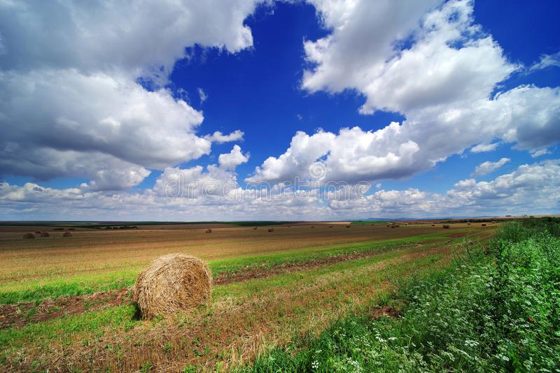 Gebied in Juni na gerst het oogsten Broodjes van stro op geoogst gebied van gerst in Roemenië stock afbeelding
