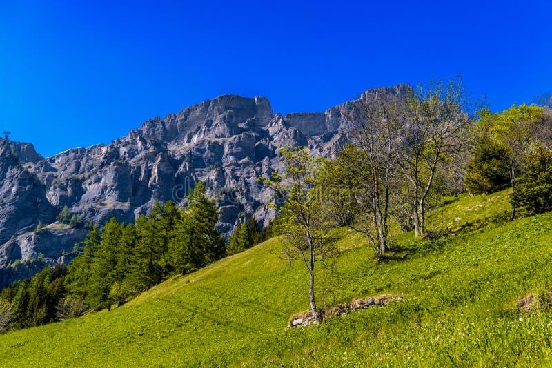 Gebied met bomen in de Zwitserse bergen van de Alp, Leukerbad, Leuk, Visp royalty-vrije stock fotografie