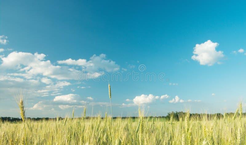 Download Gebied met hemel stock foto. Afbeelding bestaande uit growing - 10778996
