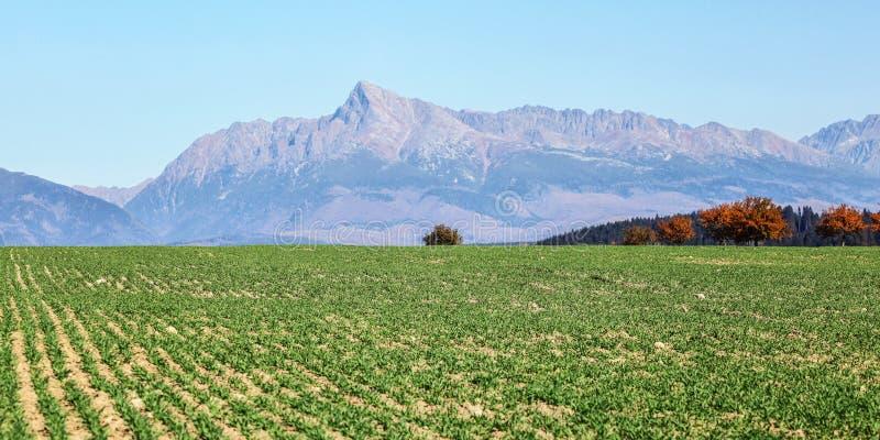 Gebied met jonge groene gewassen, panorama van Vysoke Tatry met het piek Slowaakse symbool van onderstelkrivan in afstand stock afbeelding