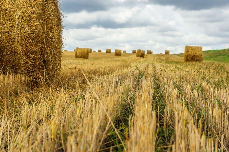 Gebied met schoven van hooi oogst stock foto's