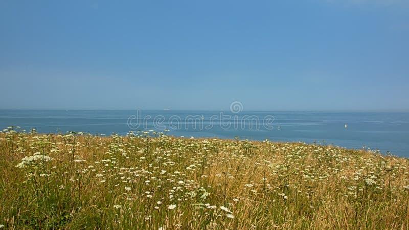 gebied met wildflowers D op de klippen van de Opalen kust, met blauwe Noordzee en hemel op de achtergrond stock afbeeldingen