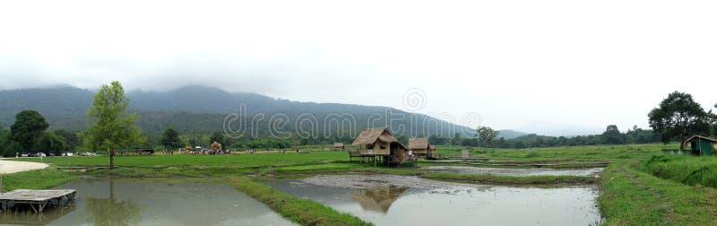 Gebied, padiegebied, het platteland van landelijk Thailand royalty-vrije stock foto's