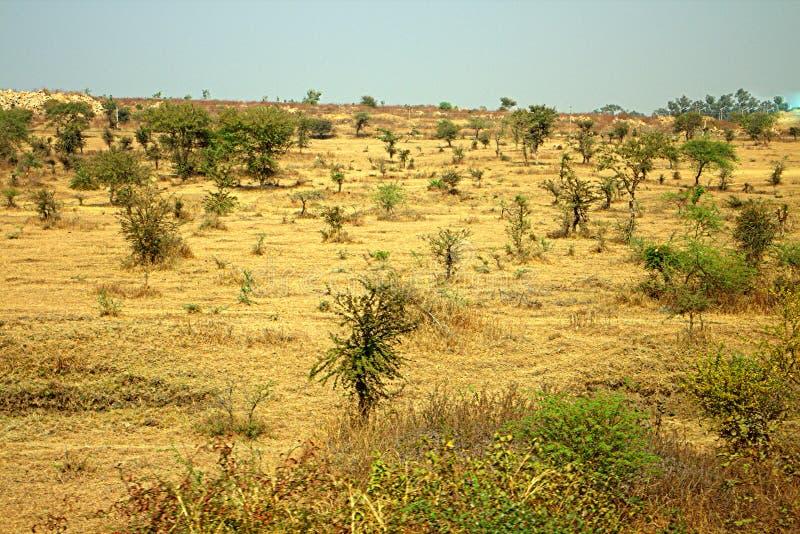 Gebied rond Nagpur, India Droge uitlopers royalty-vrije stock afbeelding