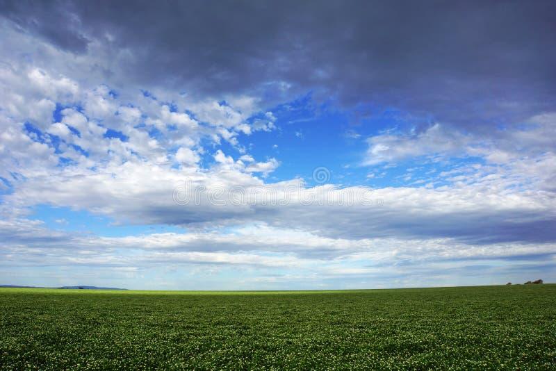 Gebied tegen hemel, landbouw en de landbouwland met hemel en wolken in Victoria, Australië stock foto