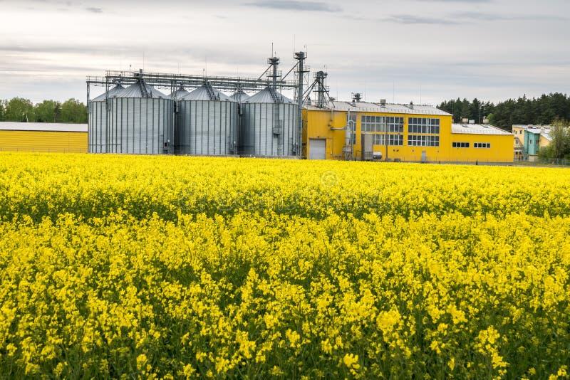 Gebied van bloem van raapzaad, canolakoolzaad in Brassica napus bij agro-verwerkt installatie voor verwerking en zilveren silo's  royalty-vrije stock foto's