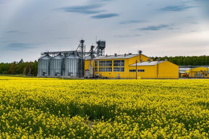 Gebied van bloem van raapzaad, canolakoolzaad in Brassica napus bij agro-verwerkt installatie voor verwerking en zilveren silo's  stock fotografie