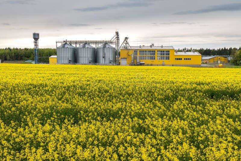 Gebied van bloem van raapzaad, canolakoolzaad in Brassica napus bij agro-verwerkt installatie voor verwerking en zilveren silo's  royalty-vrije stock foto