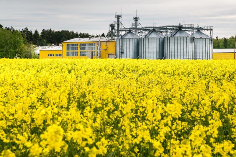 Gebied van bloem van raapzaad, canolakoolzaad in Brassica napus bij agro-verwerkt installatie voor verwerking en zilveren silo's  royalty-vrije stock afbeelding