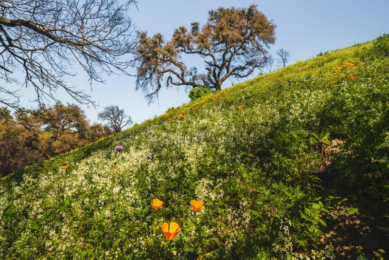 Gebied van bloemen en eiken boom royalty-vrije stock afbeeldingen