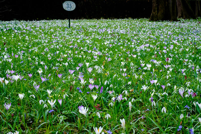 Gebied van boodschappers van de lente stock afbeelding