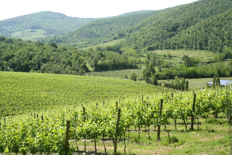 Gebied van Chianti in Toscanië (Italië) royalty-vrije stock afbeeldingen