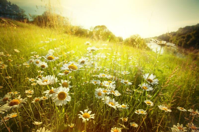 Gebied van de lentebloemen royalty-vrije stock foto