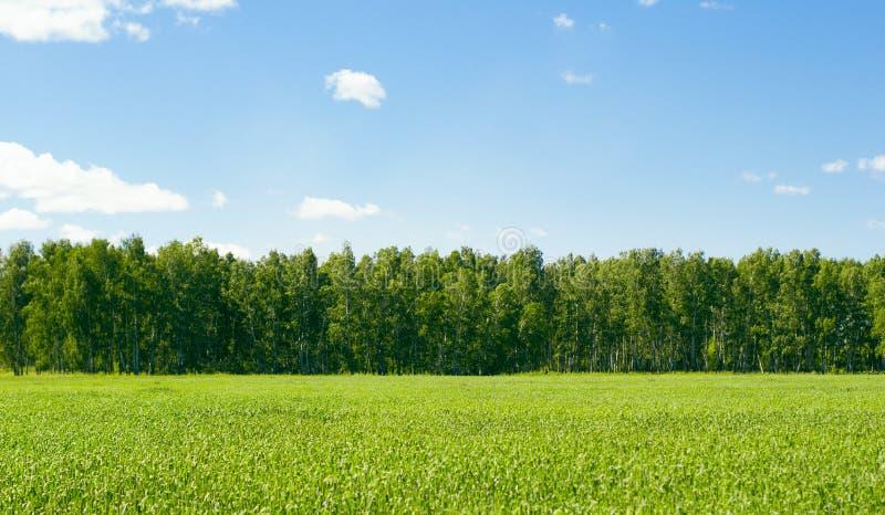 Gebied van de lentegras en bos in de dag stock foto