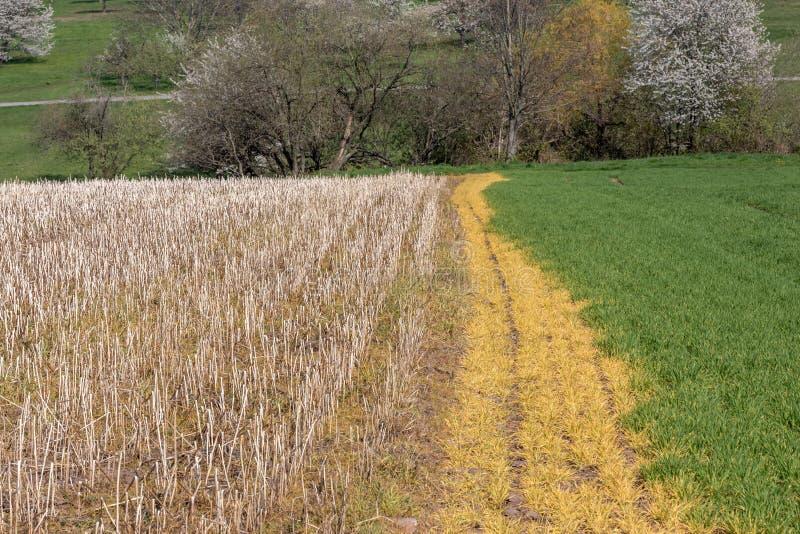 Gebied van de wintertarwe door herbicide wordt beschadigd dat royalty-vrije stock foto