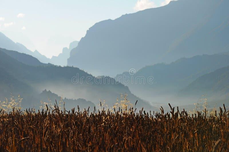 Gebied van graangewassen, Nepal royalty-vrije stock fotografie
