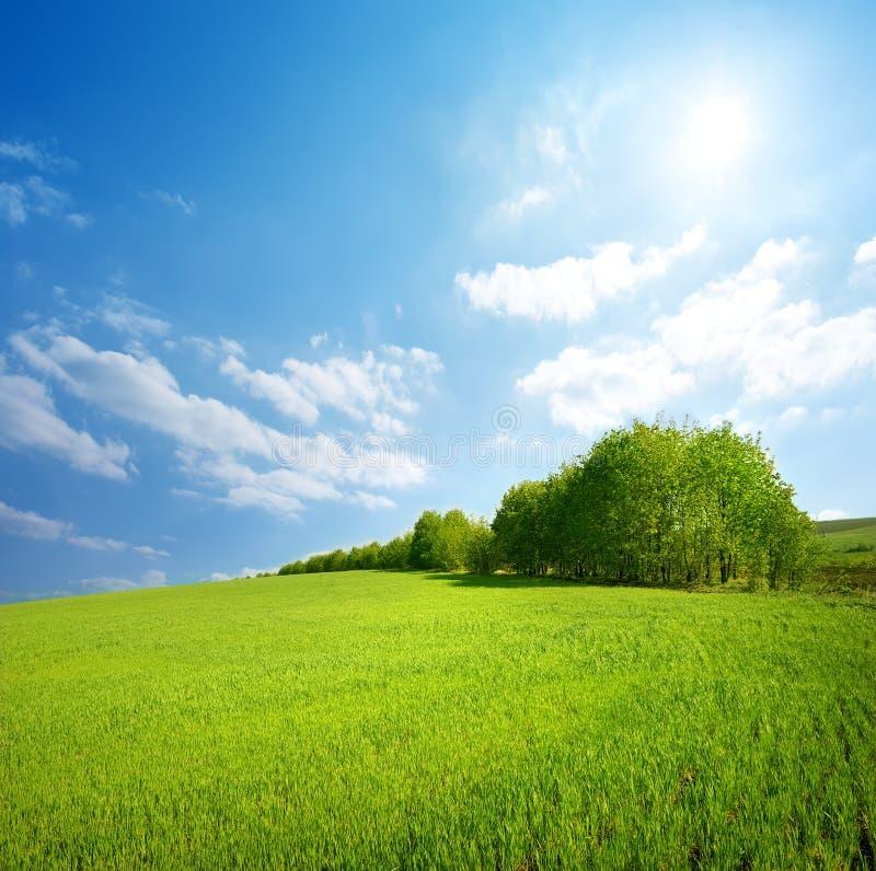 Gebied van gras en bomen stock afbeelding