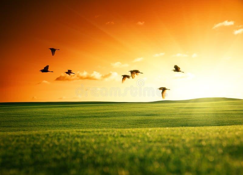 Gebied van gras en vogels stock foto's