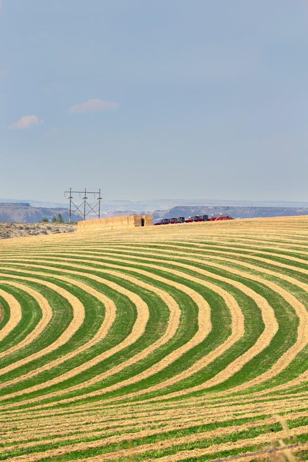Gebied van het centrum het spil geïrrigeerde landbouwbedrijf stock foto's